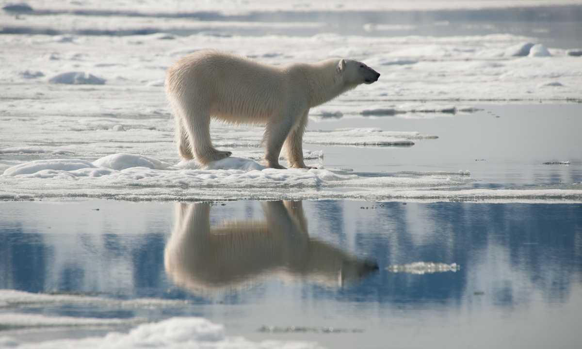 OCE_Erwin-Vermeulen_OCE_RTD_Polar-Bear-North-Spitsbergen-July