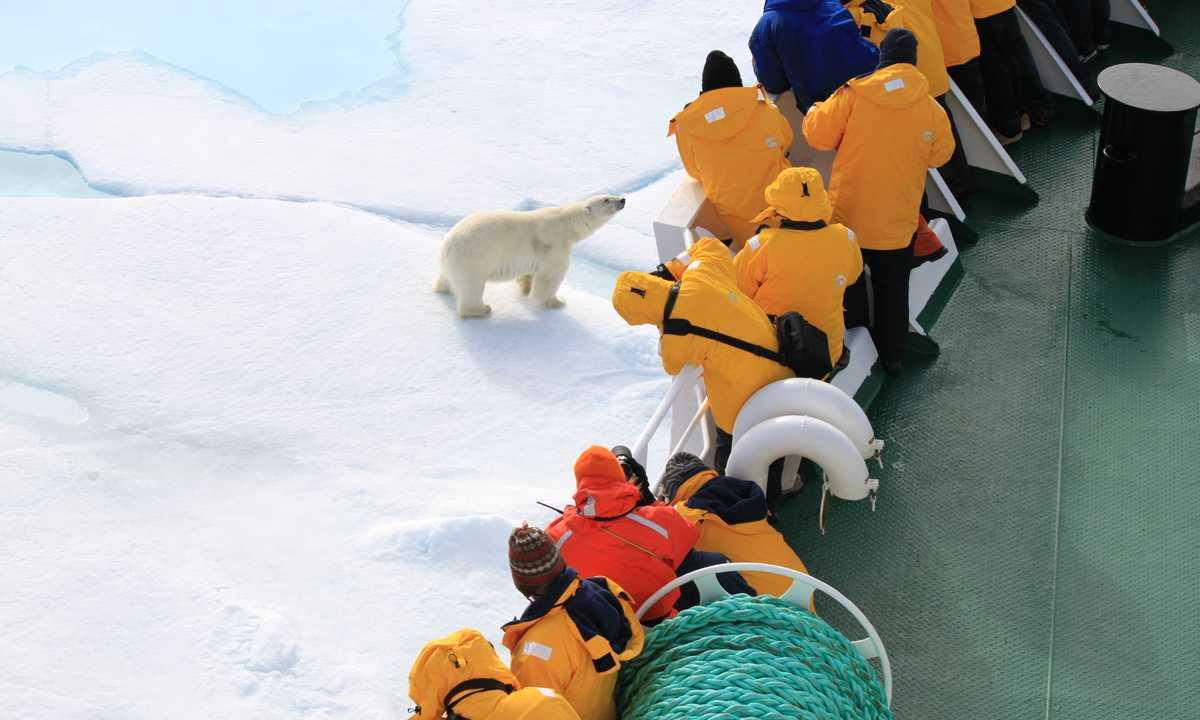 QUA_3_Laurie-dick_ERS_polar-bear-passengers-spitsbergen