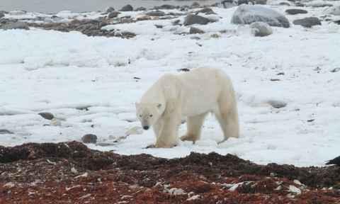 Arctic Travel October 2017