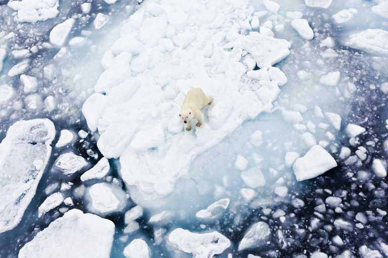 Shu_3_shu_rdt_polarbearicefield