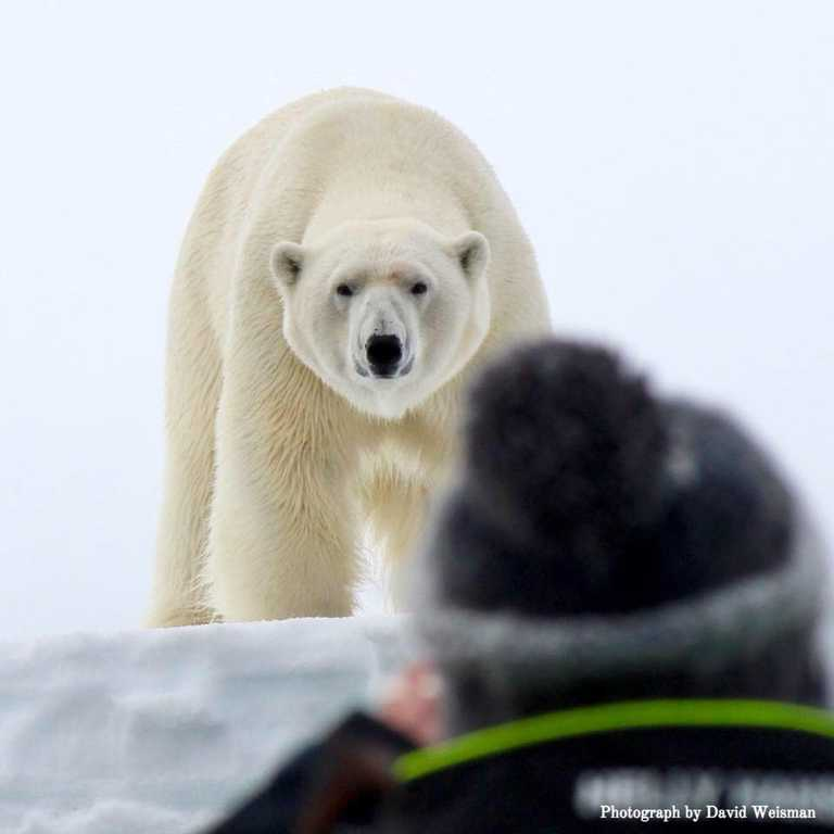 TWI_5_ALL_TWINTRACKS_POLAR_BEAR_PHOTOGRAPHER_CAPTIONED