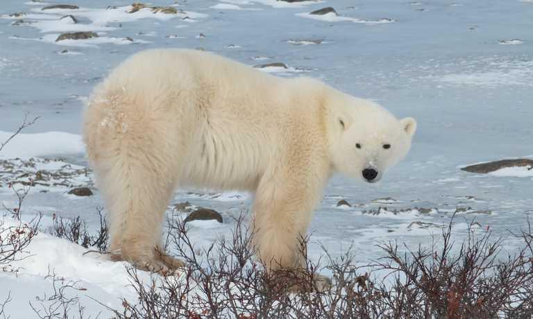 Arctic Travel October 2018