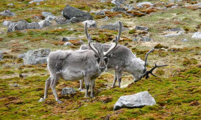 High Arctic Explorer: Svalbard, Greenland & Iceland
