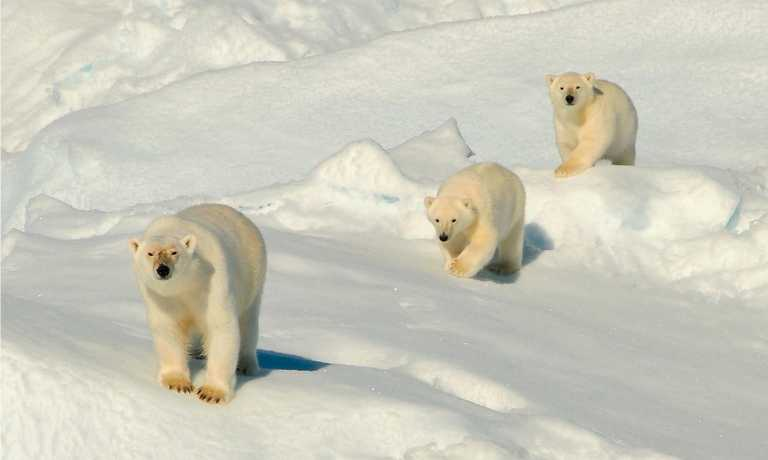 Svalbard Circumnavigation