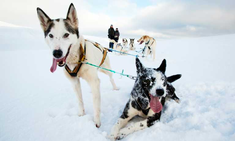 Ultimate Svalbard Dog Sledding Safari
