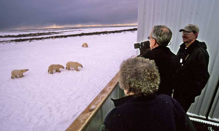 Classic Polar Bear Photographic Safari