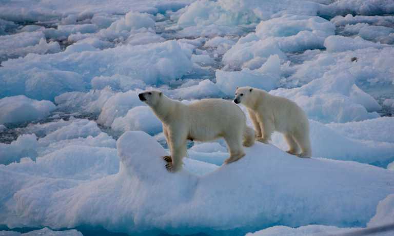 PHO_5_Martin-Aldrich_RTD_Wildlife-Polar Bears